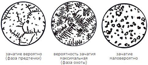 http://3sobaki.ru/data/images/kristalls.jpg